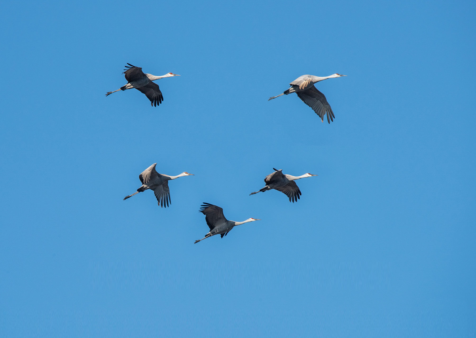 5 Sandhills Flying